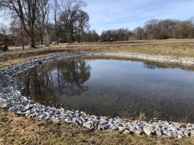 Naturen kring dagvattendammen