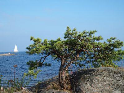 Archus-Nynashamn-Kallberga-affarsutveckling
